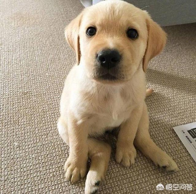 怎样选狗(怎样选狗的好坏)