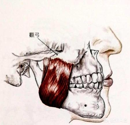除了整容,怎么能改变下颚骨的不对称?