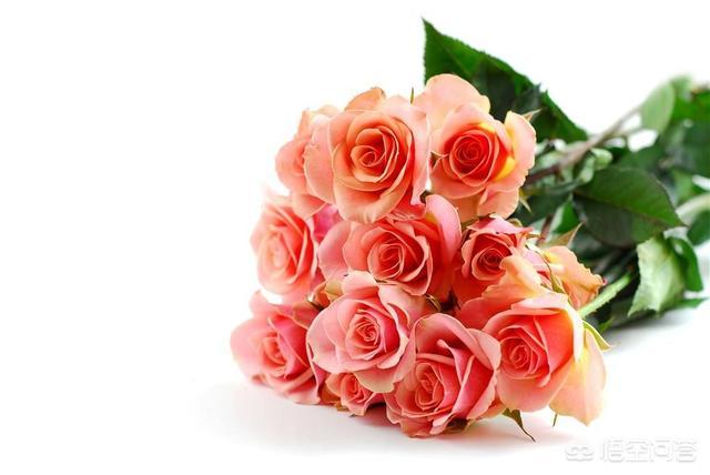 情人节礼物收到手机怎么拍,有哪些拍摄玫瑰花的技巧呢?