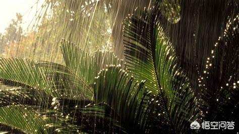 湿气究竟是从哪里来的?怎样有效除湿?插图