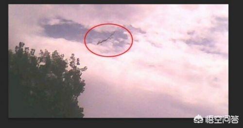 西方龙图片,历史上真的有龙和凤凰吗?
