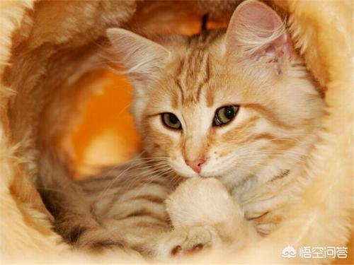 猫咪衰竭:猫咪急性肾衰竭之后,该怎么喂