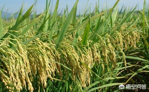 旱改水为什么有利于控制耕地减少?