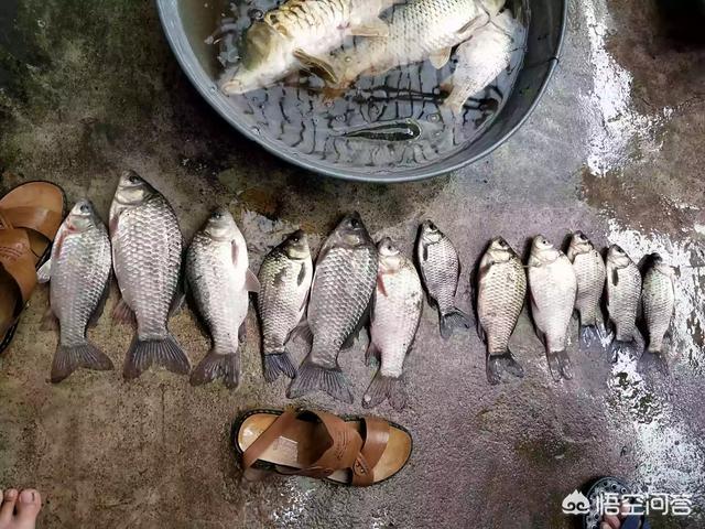 钓鱼需要哪些技巧?