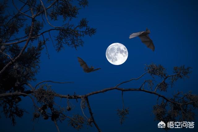 蝙蝠能在夜里飞行有什么特点 为什么蝙蝠能在夜