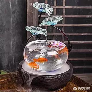 鱼缸还能养什么小动物 40小鱼缸适合养什么鱼 鱼缸子不想养鱼了,养一些不放水的小动物。有什么好的建议吗?