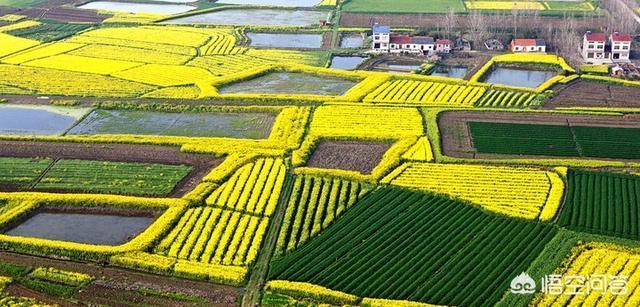 在湖北鄂州能做什么小型养殖业工程项目?EM菌在水产养殖业中如何应用?