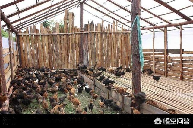 圈养养猪场怎样结构设计可以提高生产效率?这几年我国有没有捷伊水产养殖业种类引进?请介绍一下?