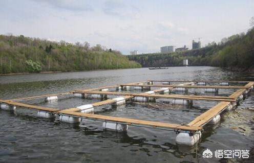 水的环境温度会对水产养殖造成怎样的影响?家有空房在农村,可以发展什么种植和养殖业?