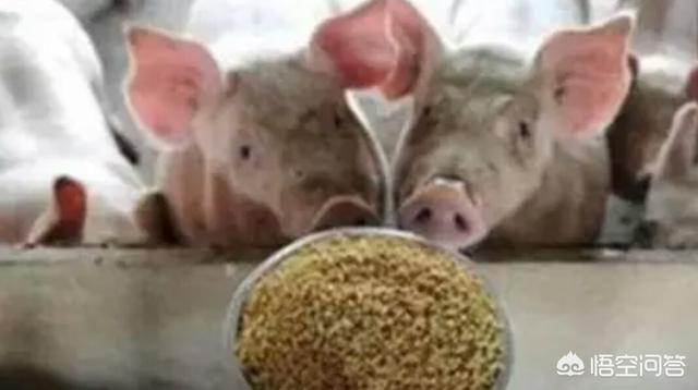 是用肉类野菜好却是用粮食供应野菜好?为此你有什么观点?请问,毛序怎么发硣?发硣的毛序野菜能吗?