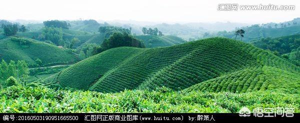(茶文化对道德立身的影响 中国文化有茶文化酒文化还有哪些)茶文化和酒文化对社会以及个人生活的影响是什么?