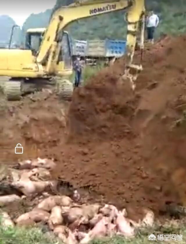 得了西非白喉的养鸡场还能继续养鸡吗?农村在耕地建养鸡场算违章建筑吗?