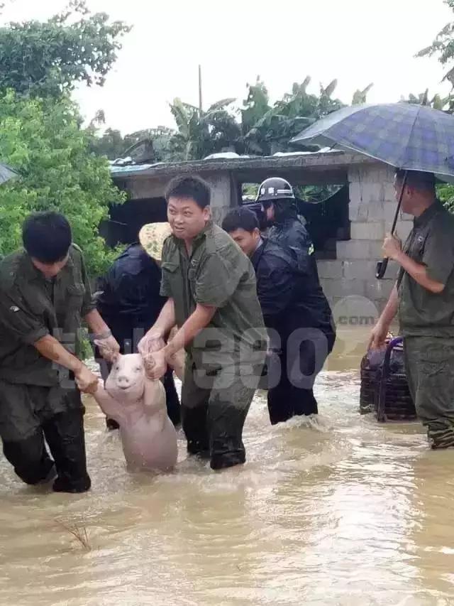 what表情包,表情包小猪是广西钦州的吗?