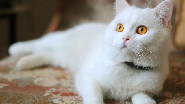 猫咪食物的名字大全:哪些人类的食物可以