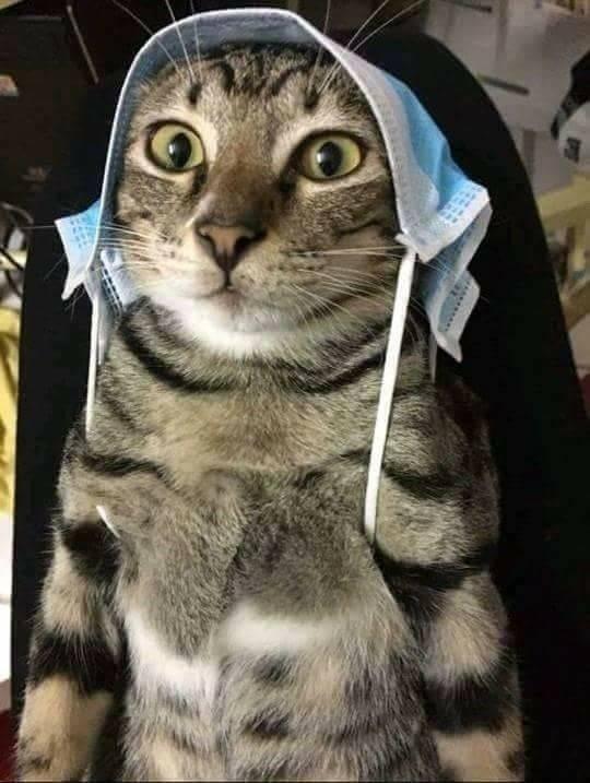肌肉猫咪:1500买了一只猫,身上花纹唬人