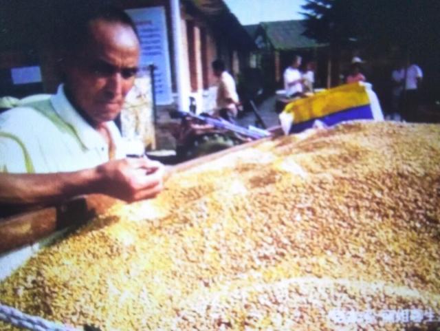 """小麦价格为什么上不来 小麦价格""""跑步上涨""""昨"""