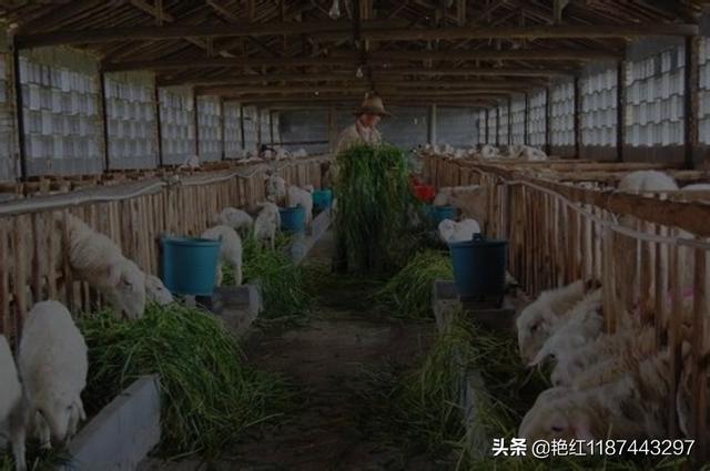 我想在家乡开养猪场,有什么建议呢?水产养殖业学专业到底好不好?(图4)