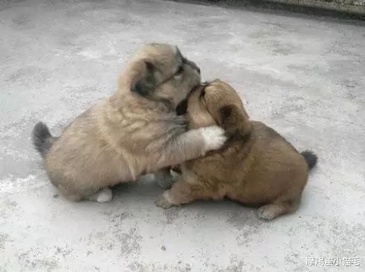 有什么狗狗特别好养?兰州能带宠物的景区都有哪些?