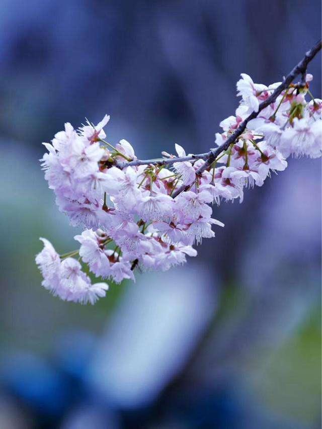 用春风写一句话一年级,用春风、鲜花、笑脸写一段话?