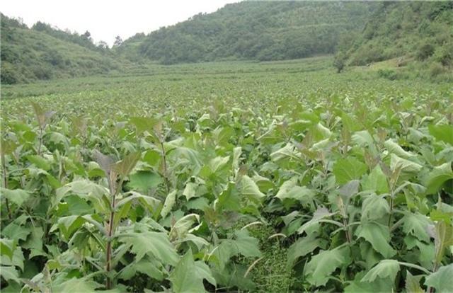 新冠肺炎下养殖业如何应对和防控?