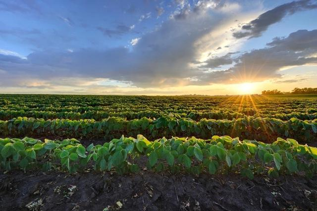 如果中国不进口饲料及用于制造饲料的粮食,现在养殖行业会怎么样?(图4)