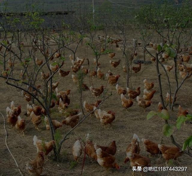 我想在家乡开养猪场,有什么建议呢?水产养殖业学专业到底好不好?