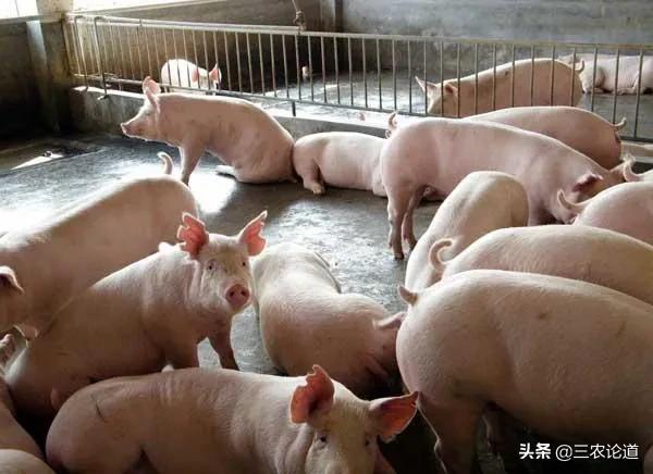 在贫困地区做什么养殖业信用风险低?2020年养猪都有哪些新政策?
