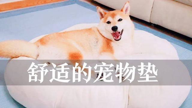 狗十三生日送礼物,狗狗过生日,送什么礼物好呢?