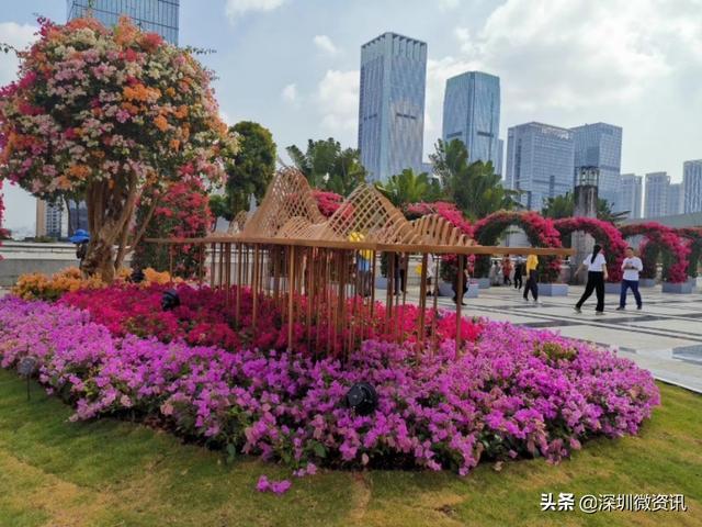 刚来深圳,有50万元想找个稳妥的生意做,有什么好的建议吗?