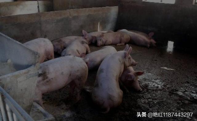 我想在家乡开养猪场,有什么建议呢?水产养殖业学专业到底好不好?(图2)