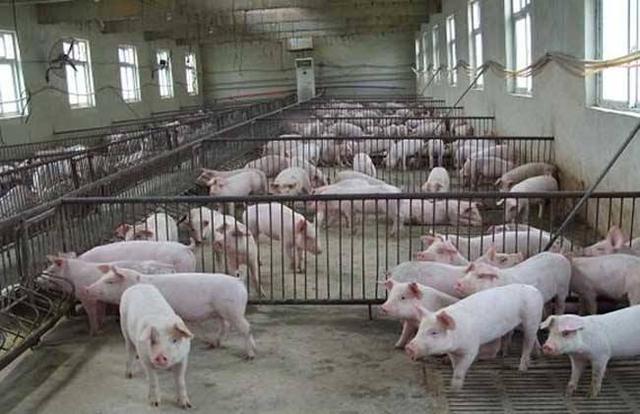 新型肺炎对农村养殖业都有哪些影响?