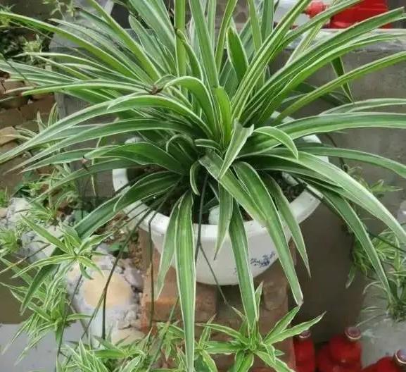 有哪些好养又好看的花草、大家都种了些什么花草?有没有省心好养活的推荐一下呗?