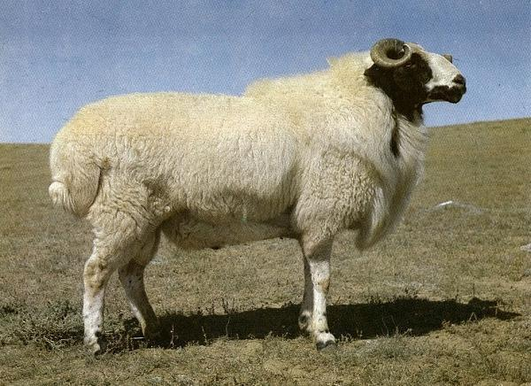 明年回农村养点羊、养点鸡,开个网店、开个超市,可以吗?