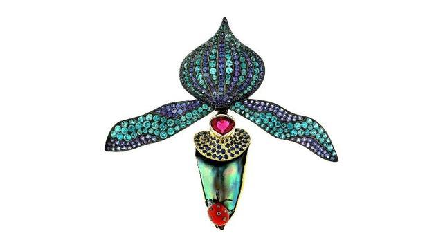 一级人体鲍鱼图欣尝,你知道鲍鱼海螺产什么珍珠吗?