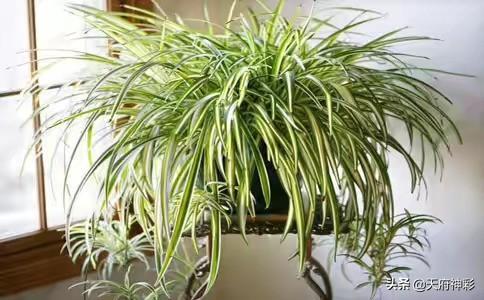 平常生活中,可以种植一下什么植物?