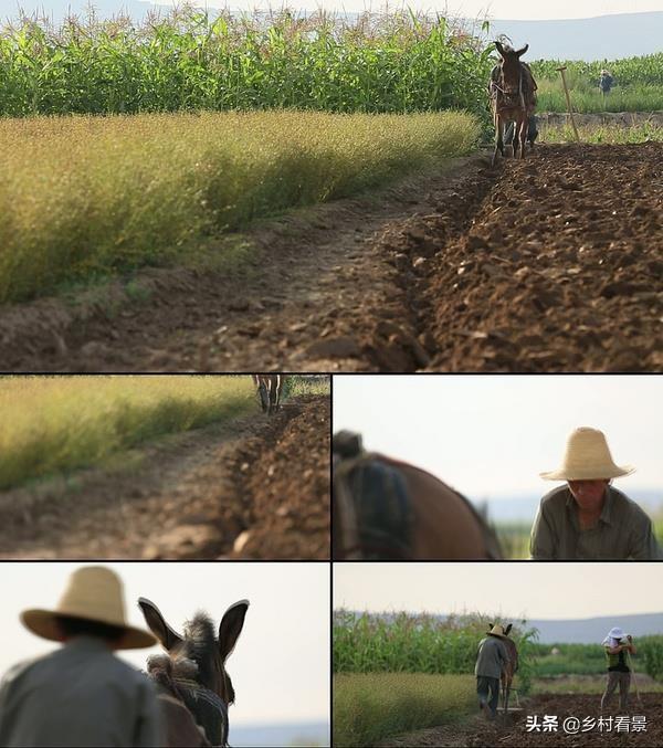 一只驴能卖到上万多块,为何在一些贫困地区很少有人养驴?养殖业鸡需要注意什么?(图1)