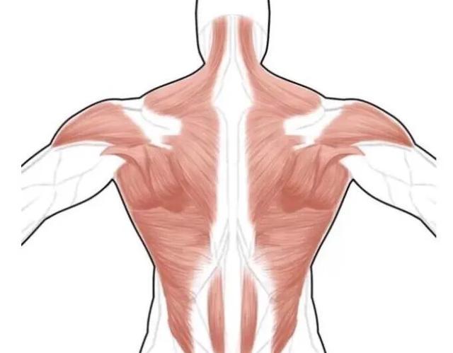 右后背疼是什么原因?