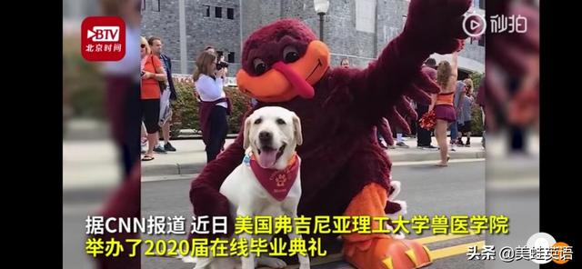 美国知名大学给狗颁发博士学位,是怎么回事?