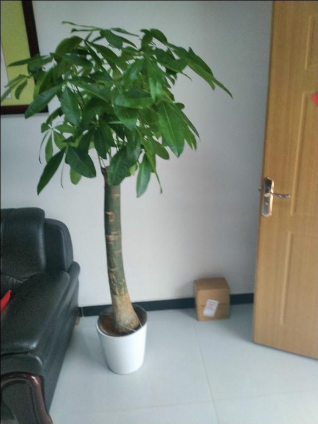 有哪些植物适合家里养?