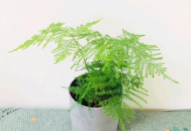 室内光照不充足,应该养哪些植物可以正常的养活?(室内适合养的植物不需要光照)