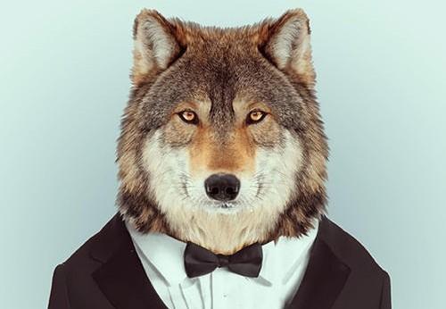 头像  动物,可以把动物作为微信头像吗?