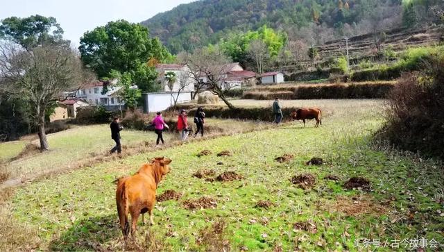 2040,2040年农村谁在种田?
