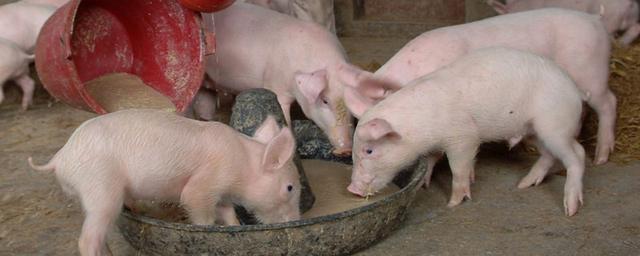 贫困地区养鸡野菜的食槽用什么金属材料做较为好?养殖业土鸡技术和规范?