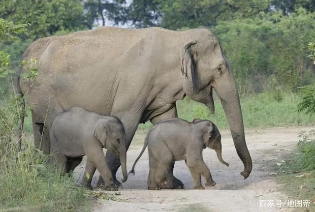 云南大象现在如何 云南大象北上500公里,在国际