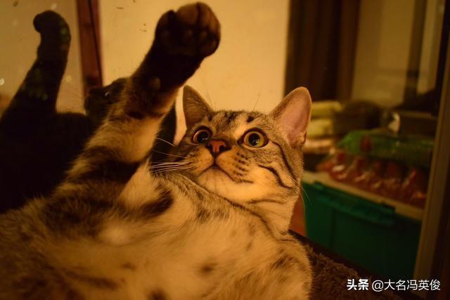 为什么宠物店都推荐买伟嘉猫粮?伟嘉很好嘛?