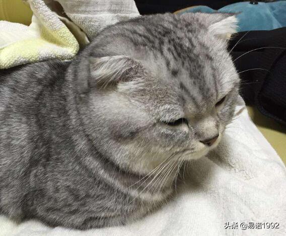 14个月的猫相当于人类几岁 猫寿命1年相当于人类