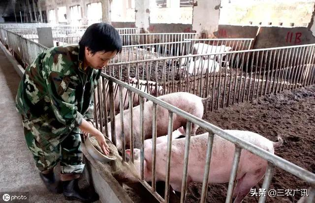 我们对今后养猪大盘趋势怎么看?那时适宜出栏吗?黄牛和水牛两者相比,养殖业哪两个前景更好?(图3)