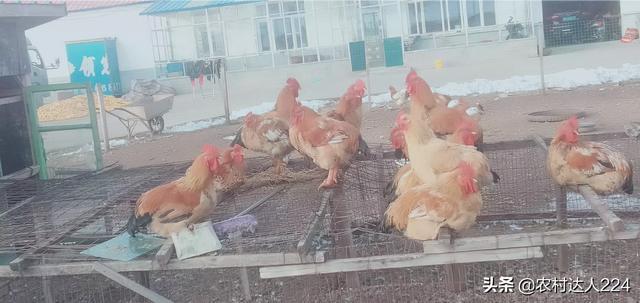 养鸡肉类的鸡精是什么?我们这里是湖北黄冈贫困地区的,如果在家,怎么发展农业?