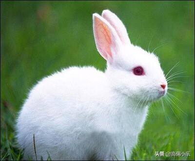 冬天散养兔如何保温?