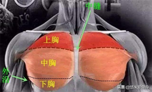 胸部最好的训练模式是什么?